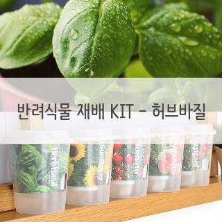 키우기쉬운 반려식물 미니화분 재배 세트 허브바질 미니화분 식물인테리어 상담문자환영 F0000974484