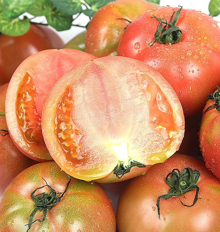 오직 정품선별! 국내산 정품 토마토 4kg/5kg